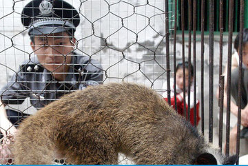 Tạm dừng nhập khẩu động vật hoang dã
