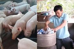 Mạnh dạn đầu tư vốn phát triển chăn nuôi, ông Cà Văn Biển từng bước làm giàu