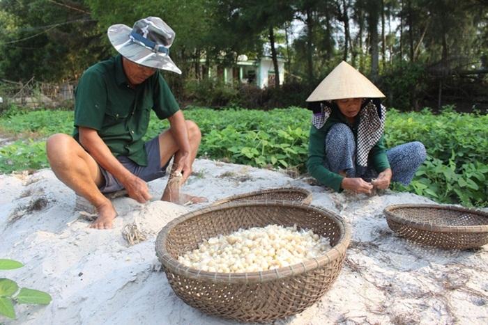 Người dân Triệu Lăng: Đổi đời nhờ chuyển đổi sinh kế sang sản xuất cây ném