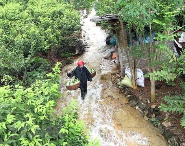 Đặc sản núi đá Xứ Lạng về Hà Nội, giá đắt gấp đôi vẫn đắt hàng