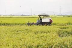 Bà con nông dân Quảng Ninh hưởng lợi nhờ áp dụng cơ giới hoá vào sản xuất