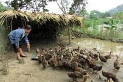 Cà Mau không để những hộ đã thoát nghèo tái nghèo
