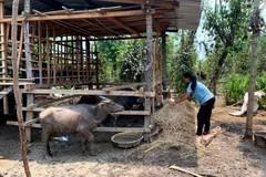 Bình Phước tạo sinh kế cho hộ nghèo ở huyện biên giới Bù Gia Mập