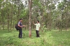 Khai thác hiệu quả quỹ đất, đồng bào A Dơi ung dung giảm nghèo bền vững