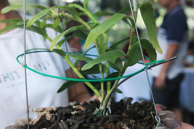 5 tỷ mua giỏ lan như rau muống, những thương vụ bạc tỷ dậy sóng làng cây cảnh