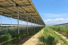 Solar farm developers fear losses of trillions of VND