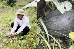 Bản vùng sâu Thẳm Phé thoát nghèo sau 3 năm tích cực trồng dưa