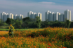 More regulations for developing green cities and climate-resilient urban areas in Vietnam
