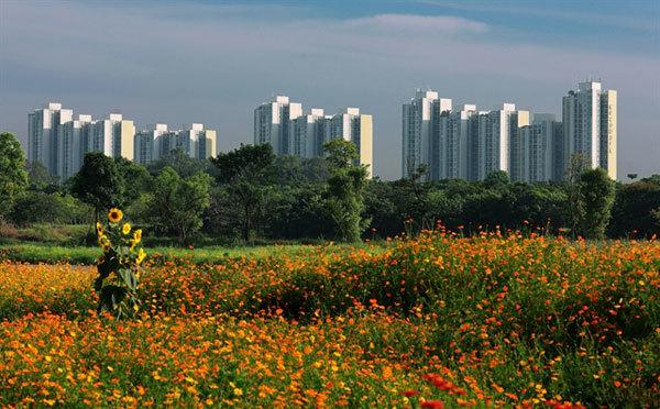 green development in vietnam