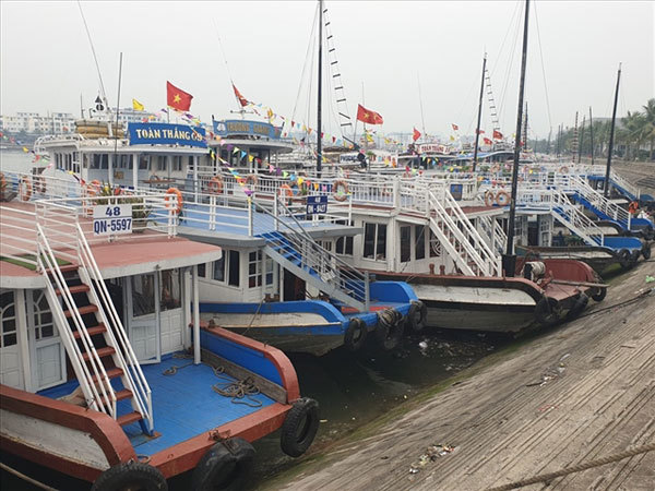 Cruise ship owners in Quang Ninh request halt to operations