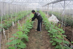 Vũ Thư triển khai dự án hỗ trợ giảm nghèo bền vững