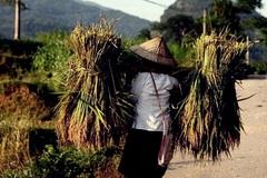 Huyện Mèo Vạc nhân rộng mô hình giảm nghèo