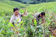 Quảng Ninh: Nhiều bà con vùng DTTS nhiều hộ dân tự nguyện viết đơn xin thoát nghèo