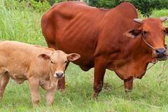 Phòng ngừa dịch bệnh cho vật nuôi trên cạn: Bắc Ninh gia cố mạng lưới thú y cơ sở