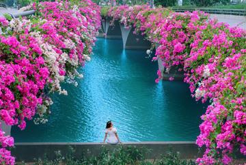 'Cực phẩm' cầu hoa giấy đẹp như tiên cảnh ở Ecopark