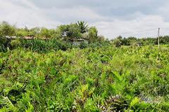 Saigontourist withdraws capital, public land bought by private company