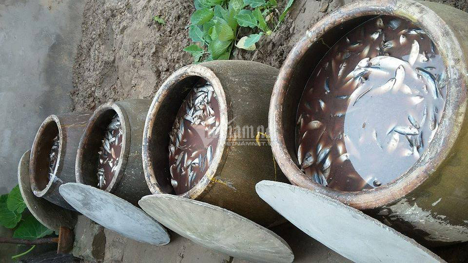 Ủ vại mắm suốt 3 năm, rút nước cốt đặc biệt bán cho dân sành
