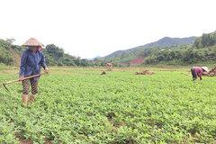 Để phụ nữ nông thôn không bị đói nghèo đeo bám