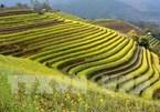 Mu Cang Chai among world's 50 most beautiful places