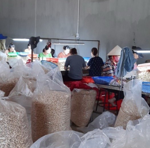 VN cashew industry in distress as demand falls
