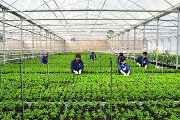 More opportunities forVietnamese to work seasonally in South Korea