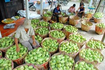 Trung Quốc tạm dừng nhập khẩu xoài Việt Nam