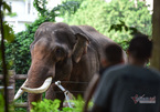 Inside the Saigon Zoo after receiving VND2.5bil. donations