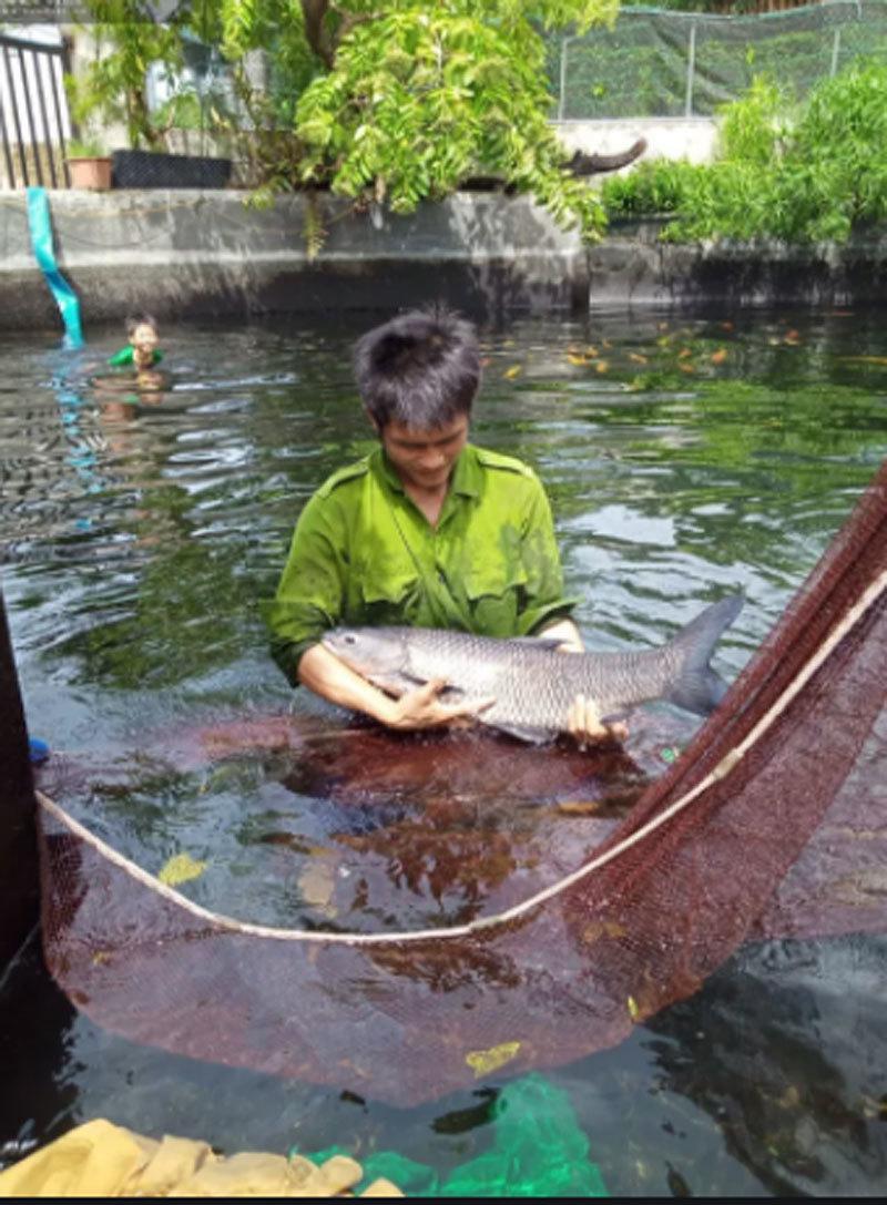Bí quyết nuôi những con cá khổng lồ của nông dân 9X cất bằng đại học, bỏ lương cao