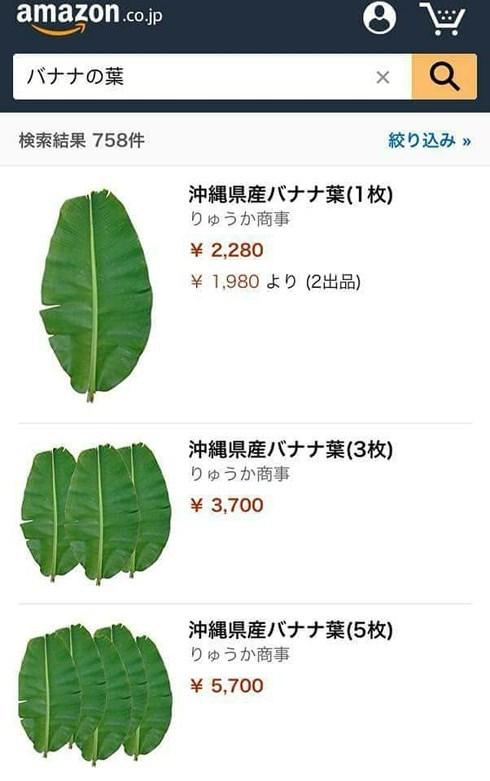 Sang Nhật, 1 cây bèo 21.000 đồng: 'Xem thôi không có tiền mua đâu'