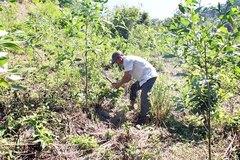 Khánh Sơn: Bảo vệ rừng nhằm bảo vệ môi trường, nâng cao sinh kế cho người dân