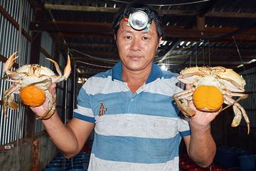Chuyện lạ miền Tây: Vỗ béo cua bán 1 triệu/con, săn cá 'quái thú' về nhậu