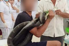 Bác sĩ ớn lạnh khi bệnh nhân mang rắn hổ mang dài gần 3m vào cấp cứu