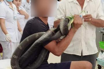 Tay Ninh: man bitten by 3m-long cobra survives