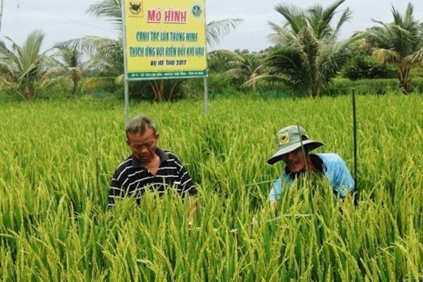 Triển khai nghị quyết Đại hội XIII: Cần thêm mô hình có sức thu hút nông dân mạnh hơn