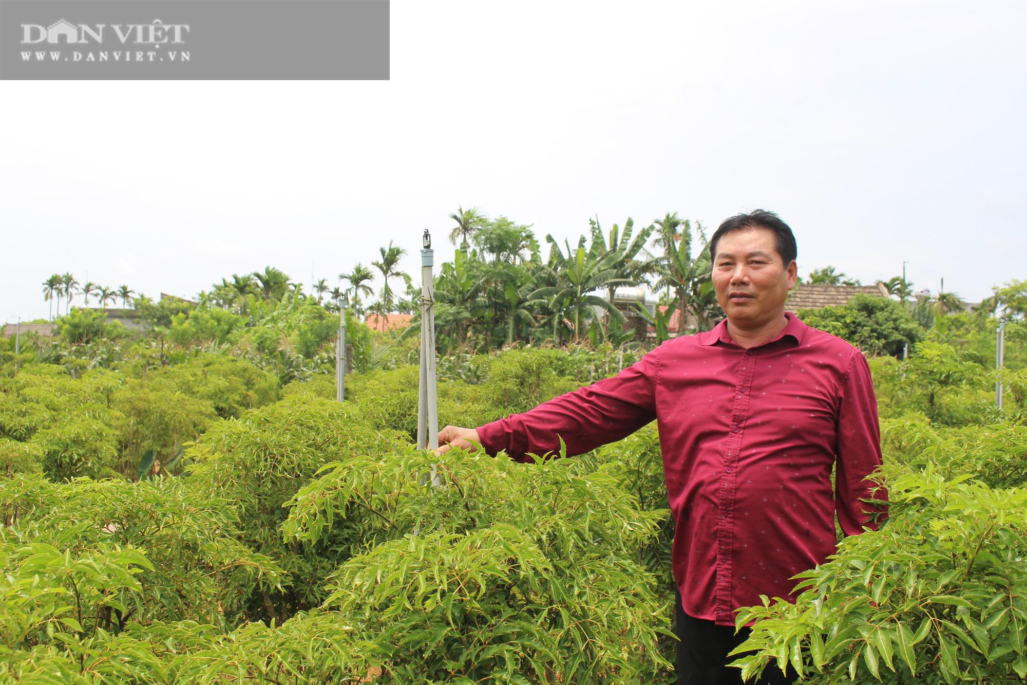 Trồng hàng vạn cây 'sâm người nghèo' mà thành đại gia của làng