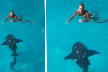 Phút đối mặt cá mập dài 2,5m của người phụ nữ