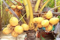 Độc đáo giống quả 2 màu ở Việt Nam cho nước ngọt lừ