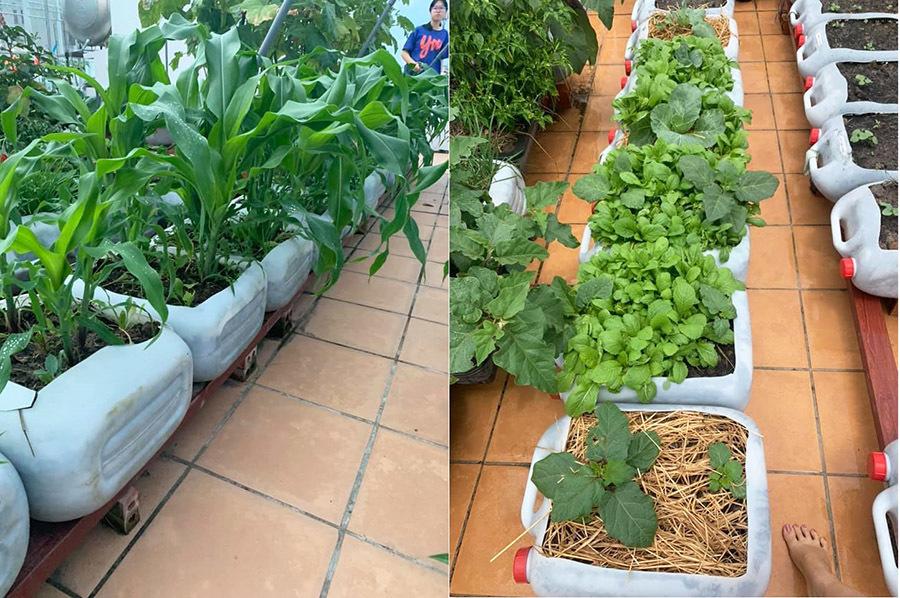 Nữ giám đốc Cần Thơ trồng vườn rau xanh mướt trên sân thượng