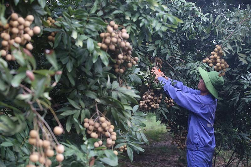 Fruit prices in traditional markets plummet as exports remain stuck