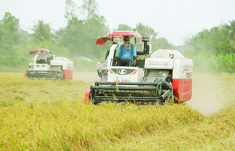 Surpassing Thailand, Vietnam becomes No 2 rice exporter in the world