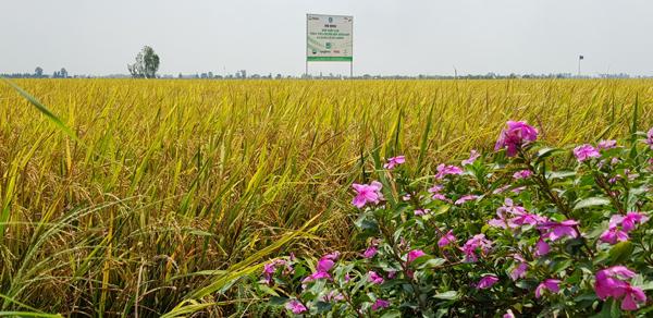 Đón đầu cơ hội từ EVFTA, giúp nông sản Việt tham gia 'sân chơi' lớn