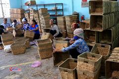 Hội LHPN Bình Thuận hỗ trợ chị em giảm nghèo, phát triển kinh tế