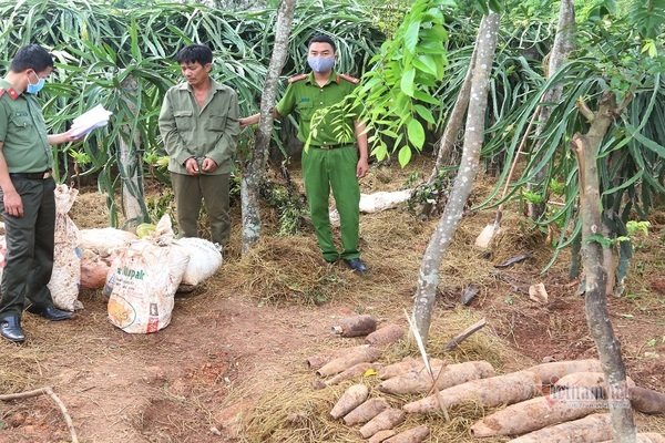 Bí mật kho thuốc nổ, đầu đạn và bom bi trong vườn thanh long