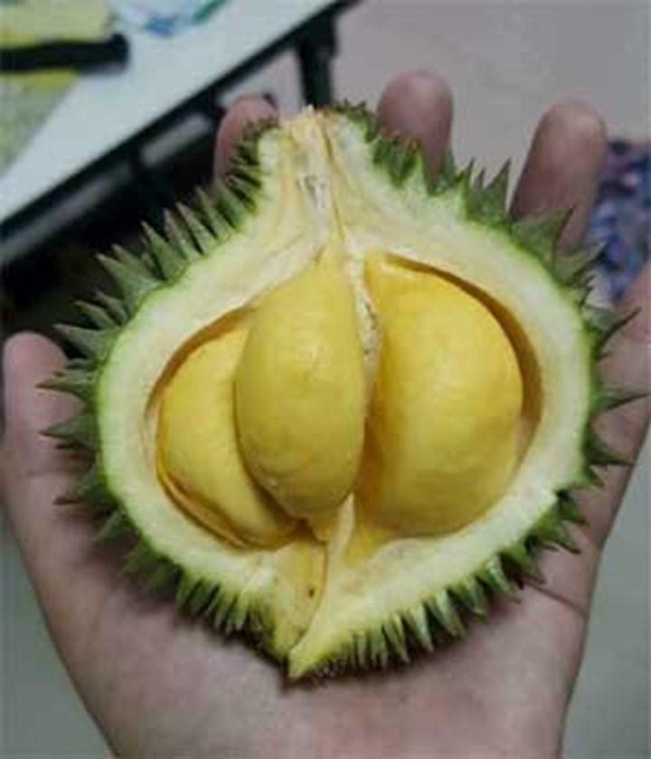 Sầu riêng, dừa... bé bằng nắm tay 'gây sốt', người bán lãi tiền triệu mỗi ngày