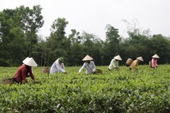 Lương Sơn: Tỷ lệ hộ nghèo giảm vượt chỉ tiêu đề ra