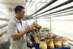Leaving university, he now earns VND30bil/year from growing mushrooms