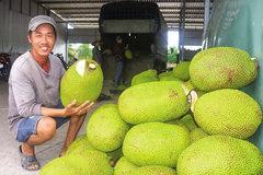 Giá mít Thái tăng 'vù vù' giữa thời dịch Covid, xuất khẩu sang Trung Quốc tăng