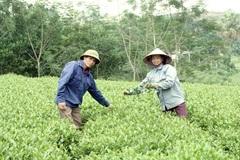 Phú Thọ: Hộ mới thoát nghèo được vay vốn với tổng dư nợ hơn 424 tỷ đồng