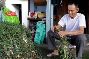 35 năm trồng cây rau dại toàn thân đeo phao trắng, ngày nào cũng cắt bán nửa tạ, bỏ túi 1 triệu