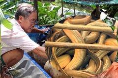 Giật mình cảnh hàng nghìn con lươn cuộn trong can nhựa